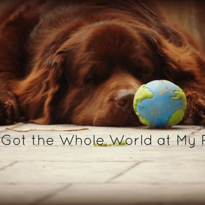 I've Got the Whole World at My Paws