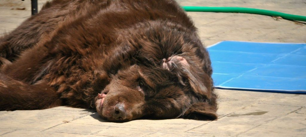 Let Sleeping Dogs Lie. 4 Different Types of Positions That You Might Find Your Dog Sleeping in Today.