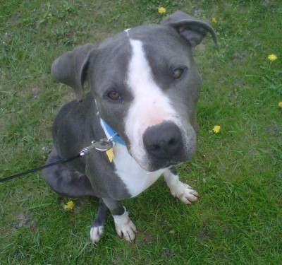Ohio Makes Changes For Pit Bulls and Exotic Animals This Week.