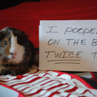 Dog Shaming, Is It a Crime?