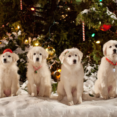 Disney's Santa Paws 2. The Santa Pups Movie Is Here!