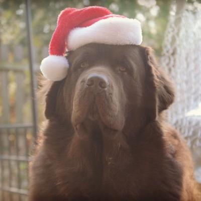 Dear Santa. I Have A Sled, But No Snow.