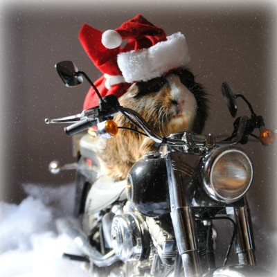 Wordless Wednesday. This Year Santa's Driving A Harley