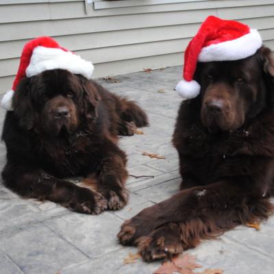 Monday Mischief. Merry Christmas