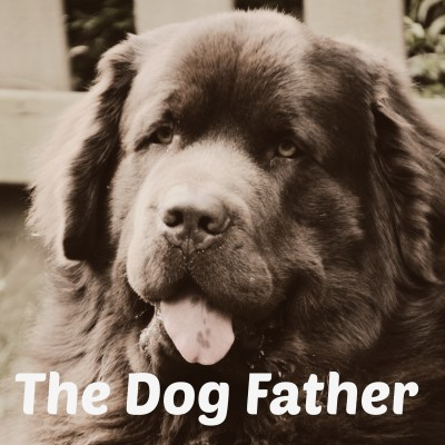 The Most Improved Dog Father