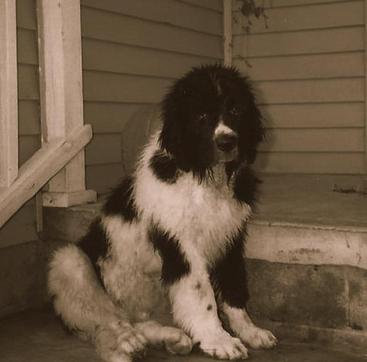 thunder puppy 001