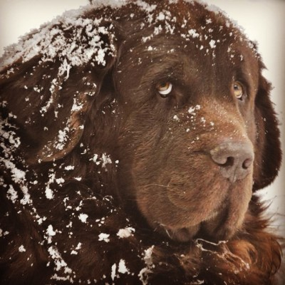 How To Safely Keep Dog Paws Protected In The Winter