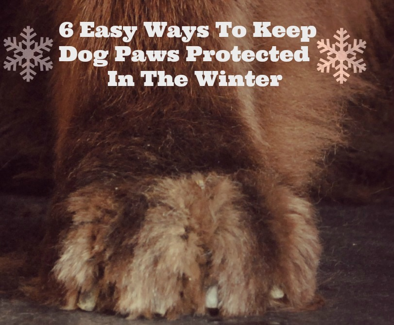 6 Easy Ways To Keep Dog Paws Protected In The Winter