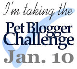 The Pet Blogger Challenge 2014