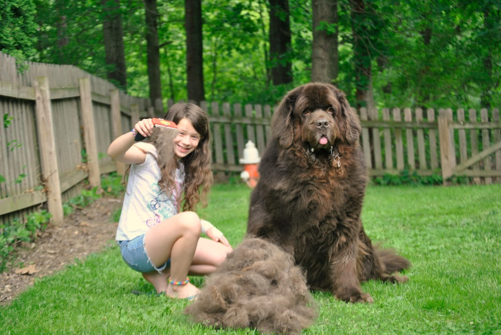 little girl her big dog and the furminator pethairsolutions