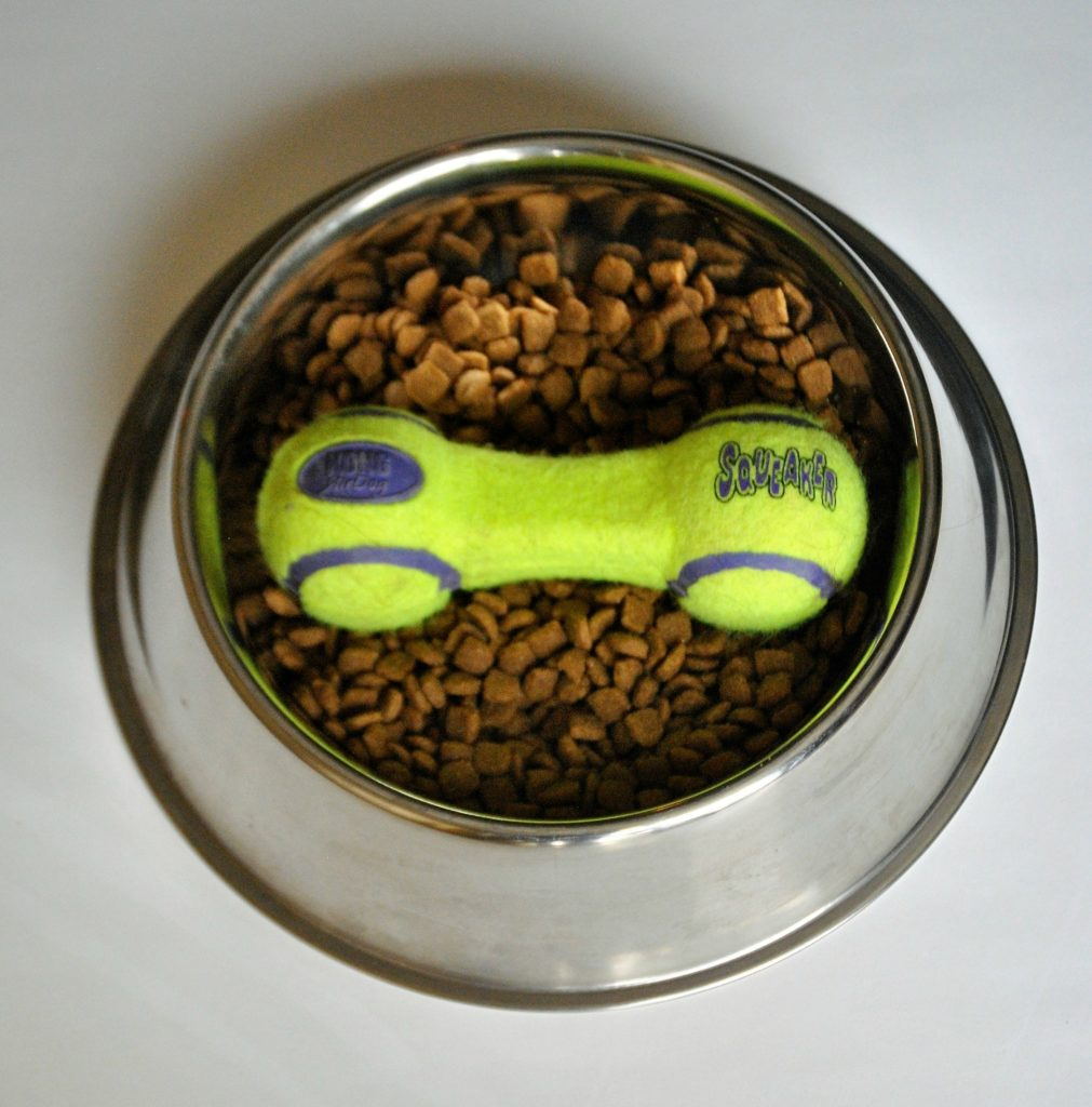 Can Dogs Eat Brown Beans