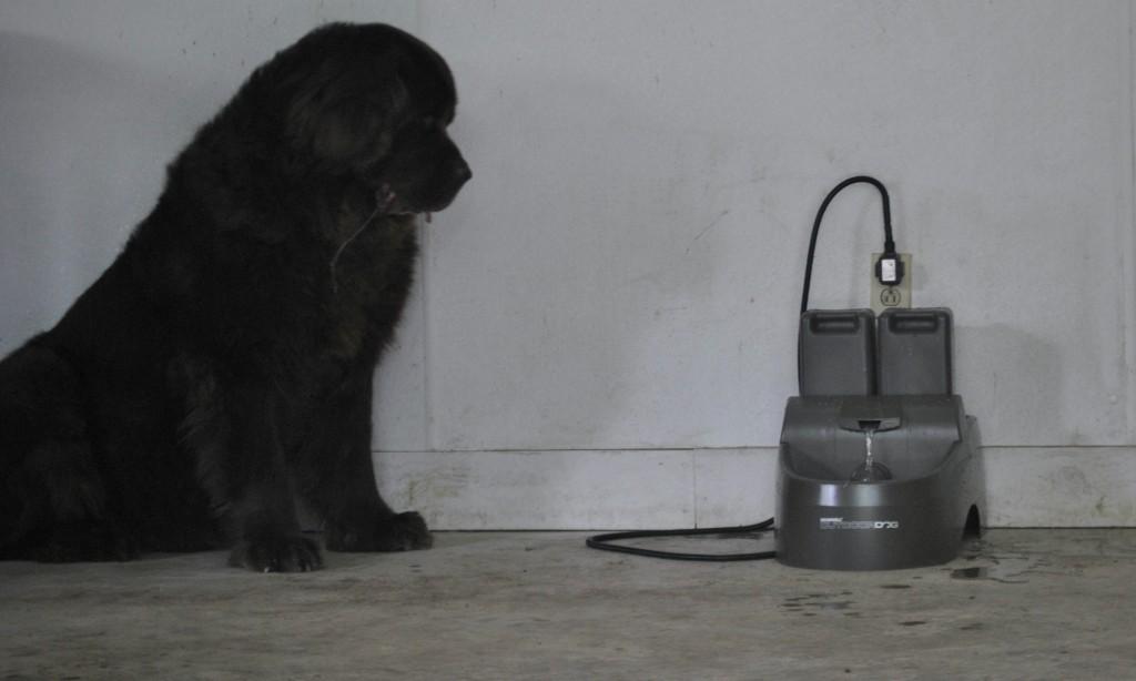 Drinkwell Big Dog Fountain Outdoor