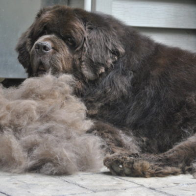 How To Remove Pet Hair From Every Surface.