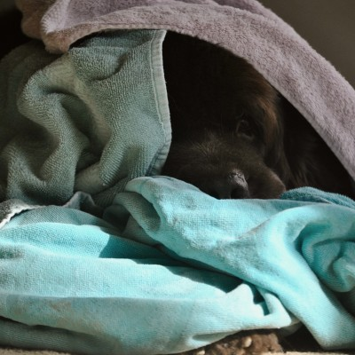 How To Keep Dog Towels Smelling Clean During Mud Season