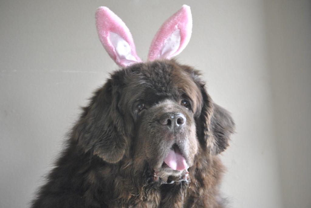 Sherman bunny