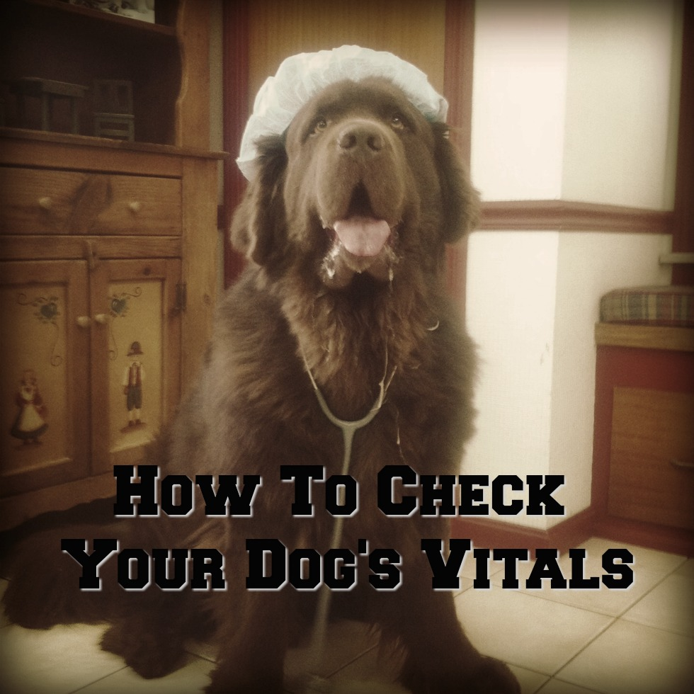 4 Ways To Check Your Dog's Vitals From Home.