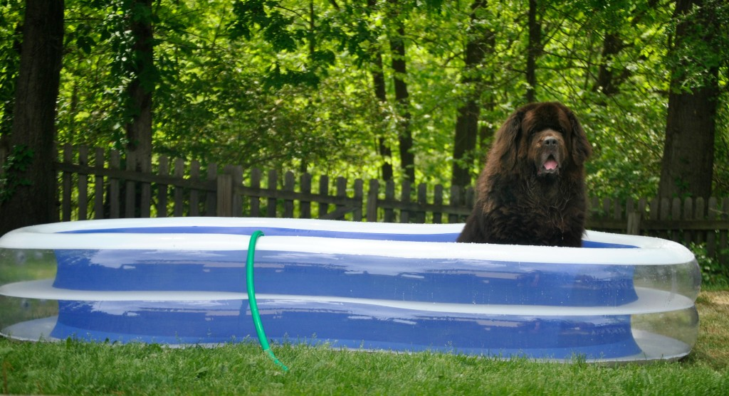 Sherman in his new pool