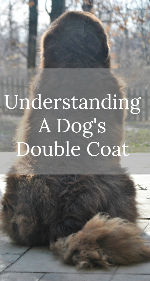 Whar Breeds Of Dogs Have Double Coats