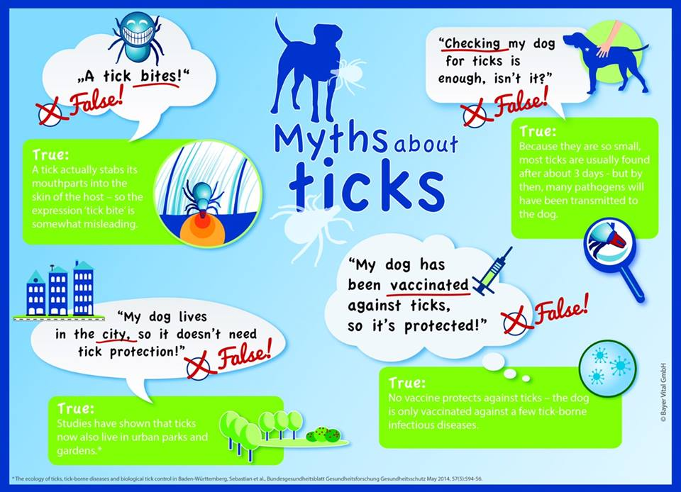myths about ticks