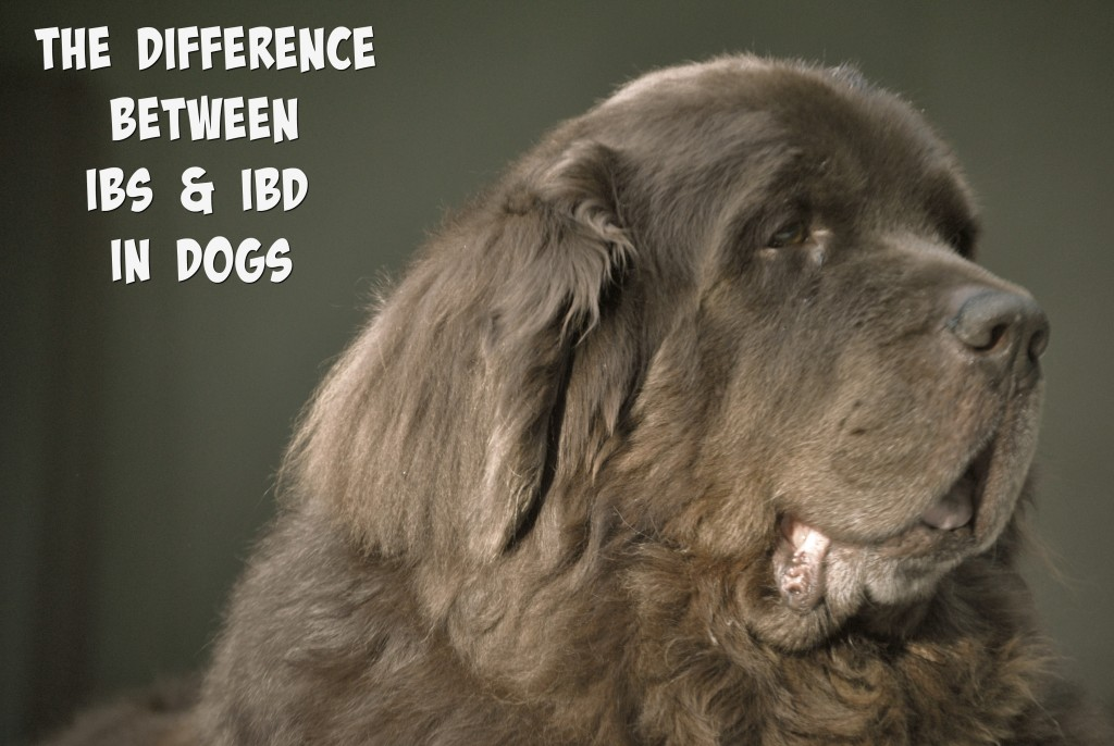 The Difference Between IBD And IBS In Dogs