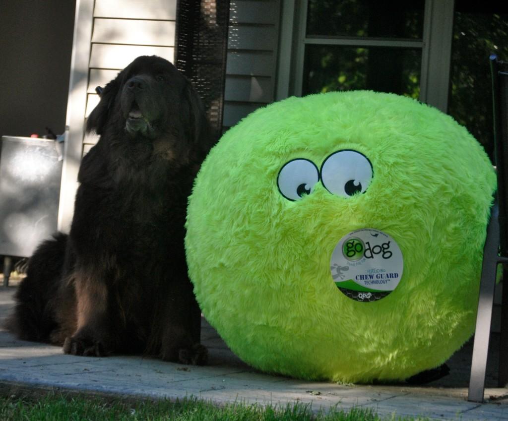 Leroy and Giant FurBallz