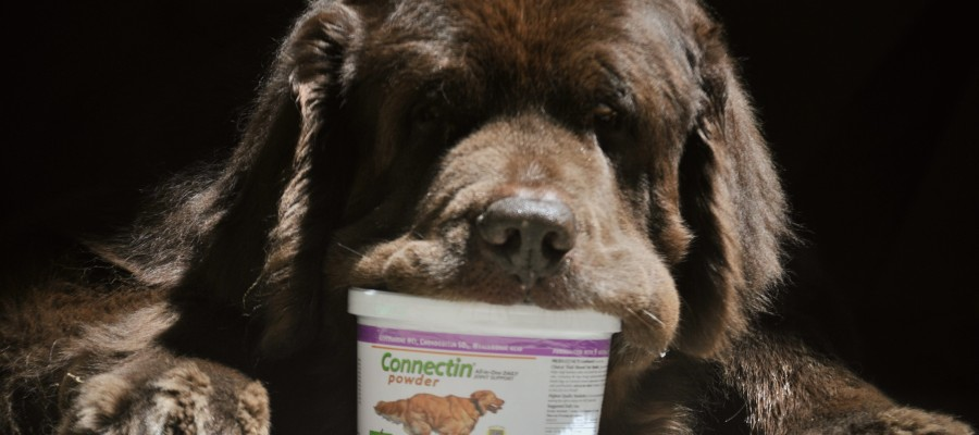 Connectin. All-In-One Daily Joint Support For Dogs