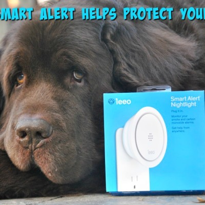 National Pet Fire Safety Day. Leeo Smart Alert Helps Protect Your Pets From Fires And More!