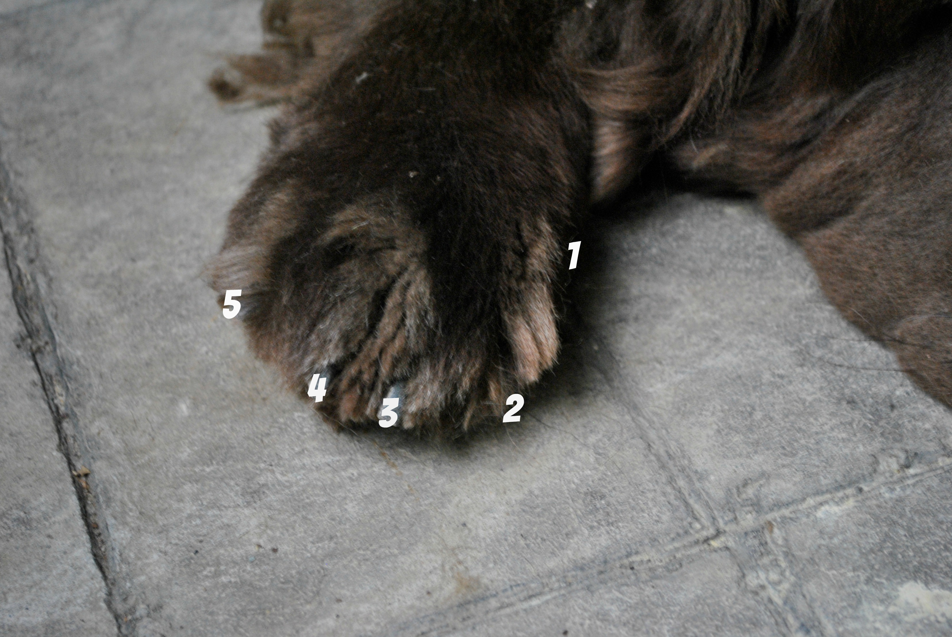 Dogs Sweat Through Paws