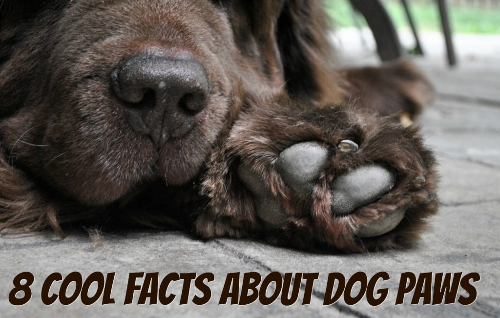 8 Cool Facts About Dog Paws