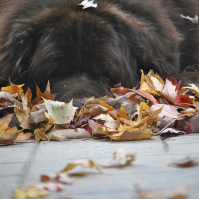 12 Reasons I Look Forward To Fall With My Dogs