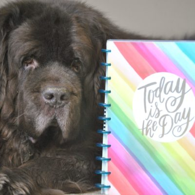 Newfoundland Dog Grooming Planner