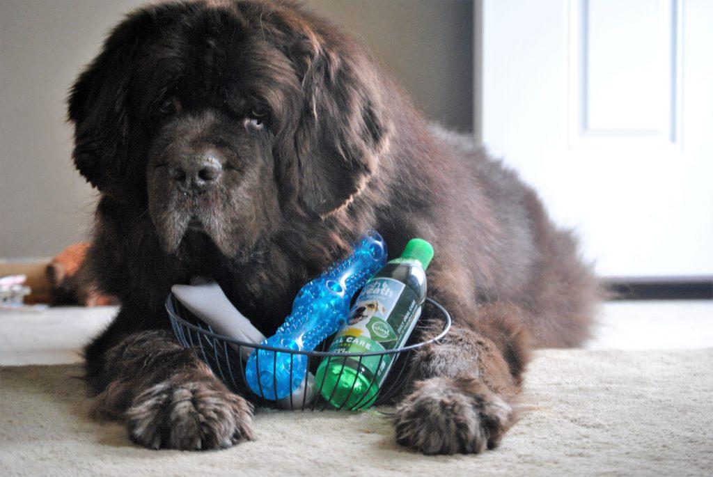Pet Valu Chew Sticks For Big Dogs