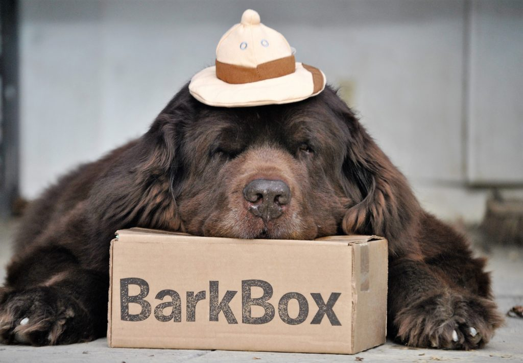 BarkBox Delivers The Safari Right To Our Door
