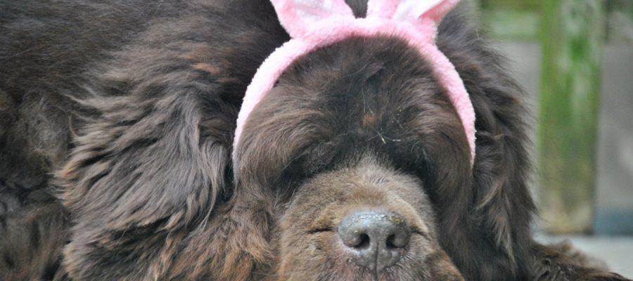 Surviving Bunny Ear Season