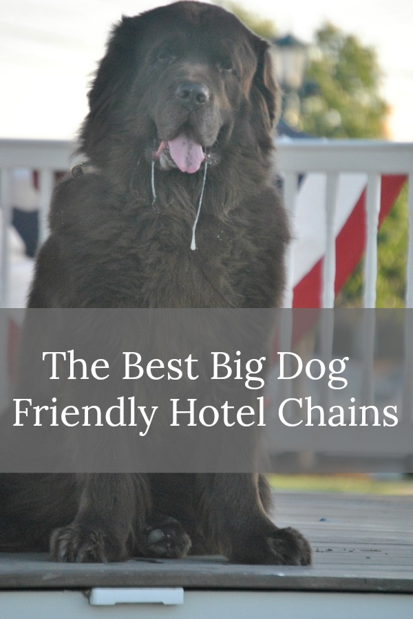 The 5 Best Big Dog Friendly Hotel Chains Mybrownnewfies Com