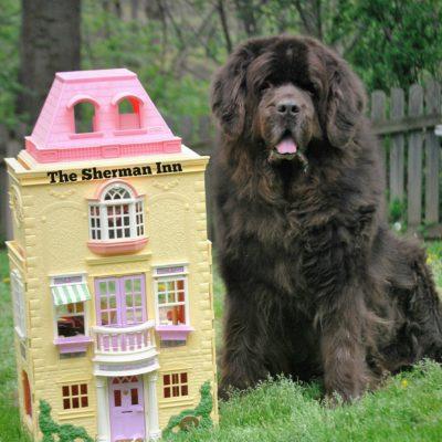 The 5 Best Big Dog Friendly Hotel Chains