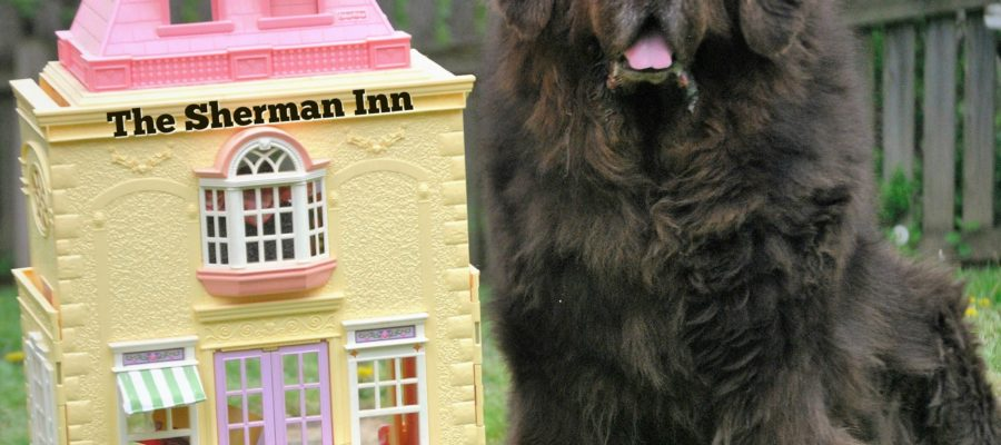 The 5 Best Big Dog Friendly Hotel Chains