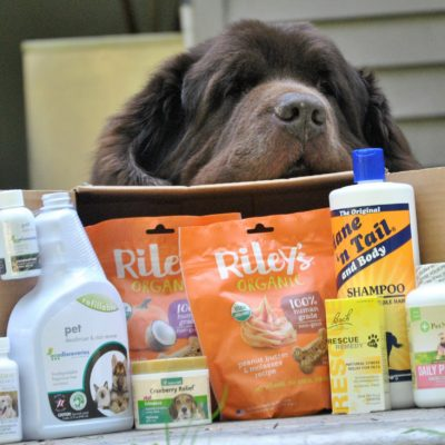 Keep Your Dog Happy and Healthy With Pet Products From iHerb