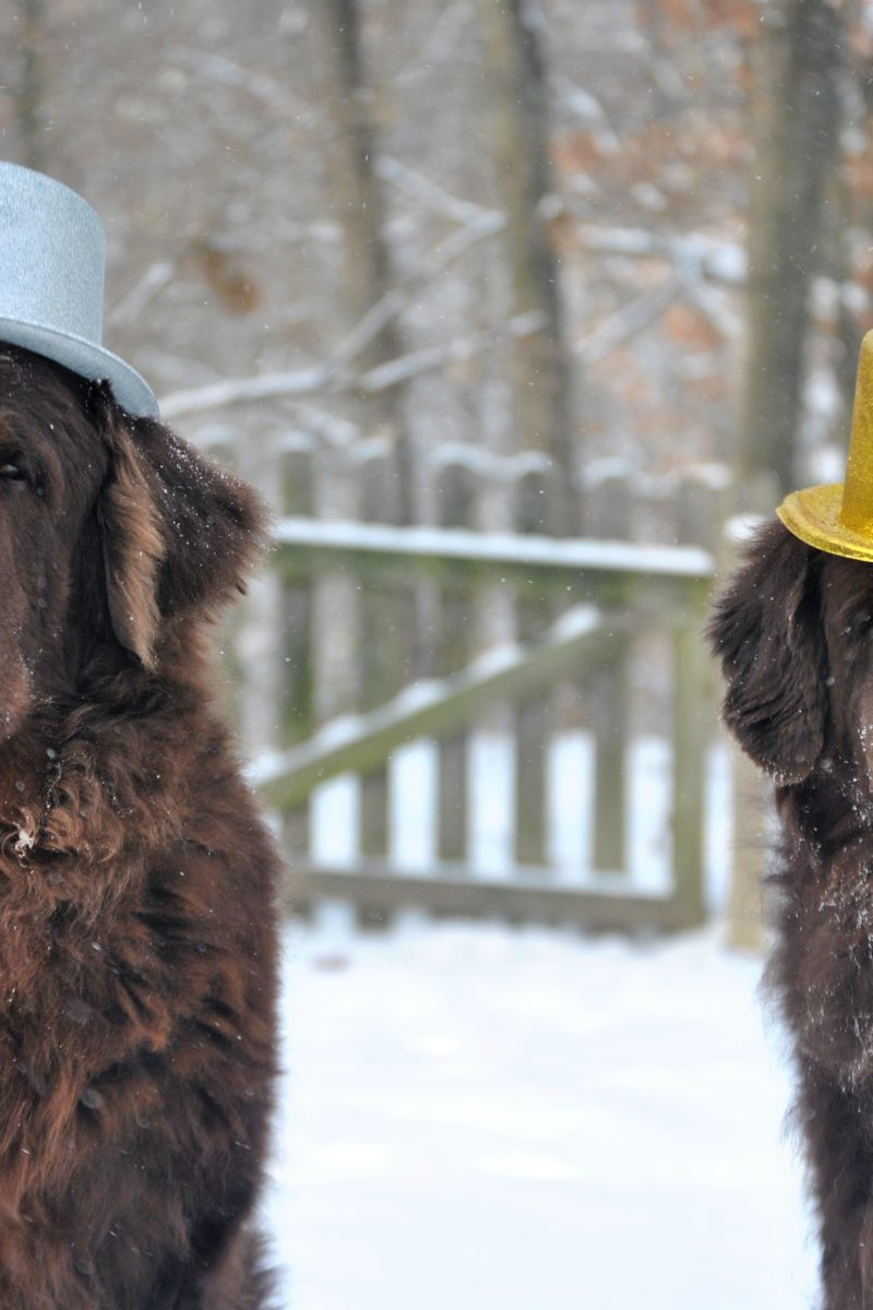 Nothin But Newfies