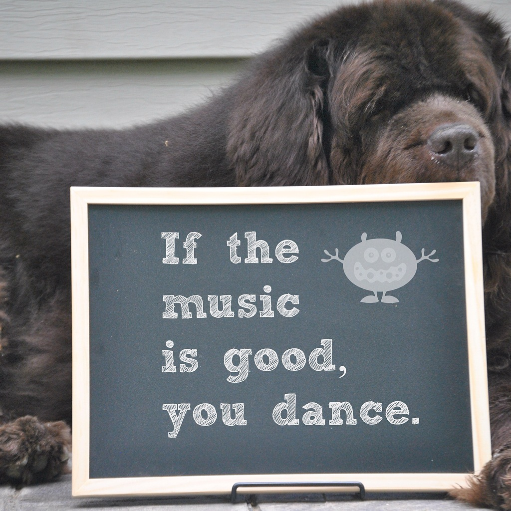 These Newfies Dance Better Than Most People I Know & 4 Easy Ways To Check If Your Dog Is Dehydrated - mybrownnewfies.com