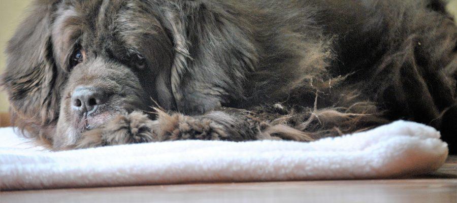 TourmaMat For Pets. A Tourmaline Pet Mat