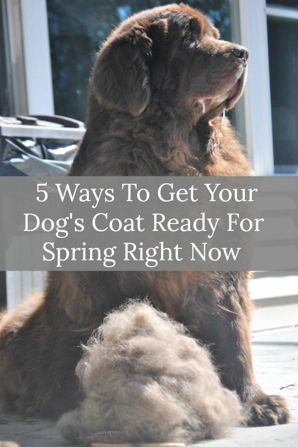 5 Ways To Get Your Dog's Coat Ready For Spring