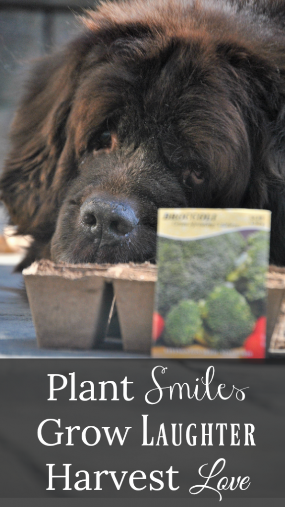 Planting a Pet Friendly Vegetable and Herb Garden