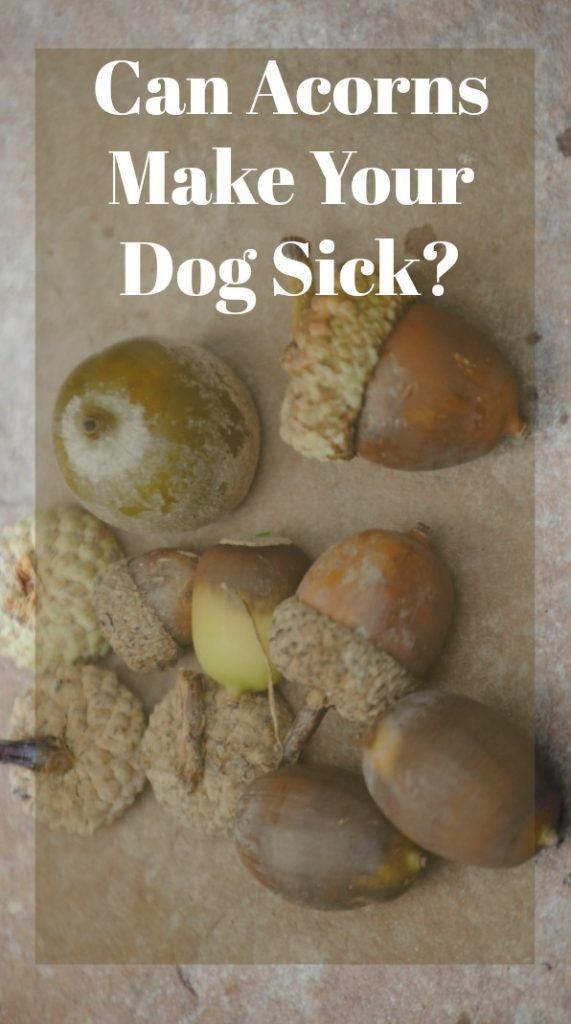how to get a sick dog to eat