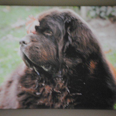 A Beautiful Canvas Print of Sherman From Printcopia