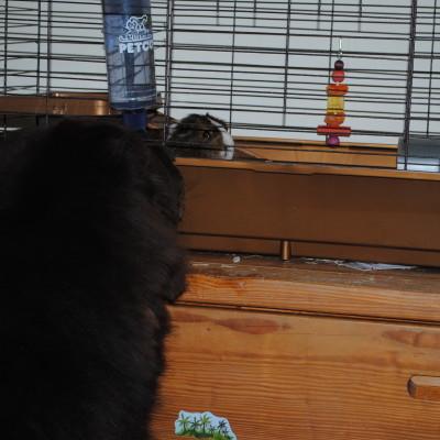 Sherman Meet Gibby. Gibby Meet Sherman.