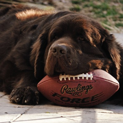Getting Ready For The Big Game This Weekend. #SuperDogSunday!