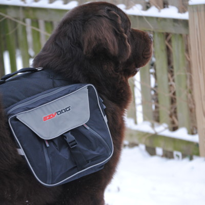EzyDog Summit Dog Backpack Review. Great For Big Dogs!