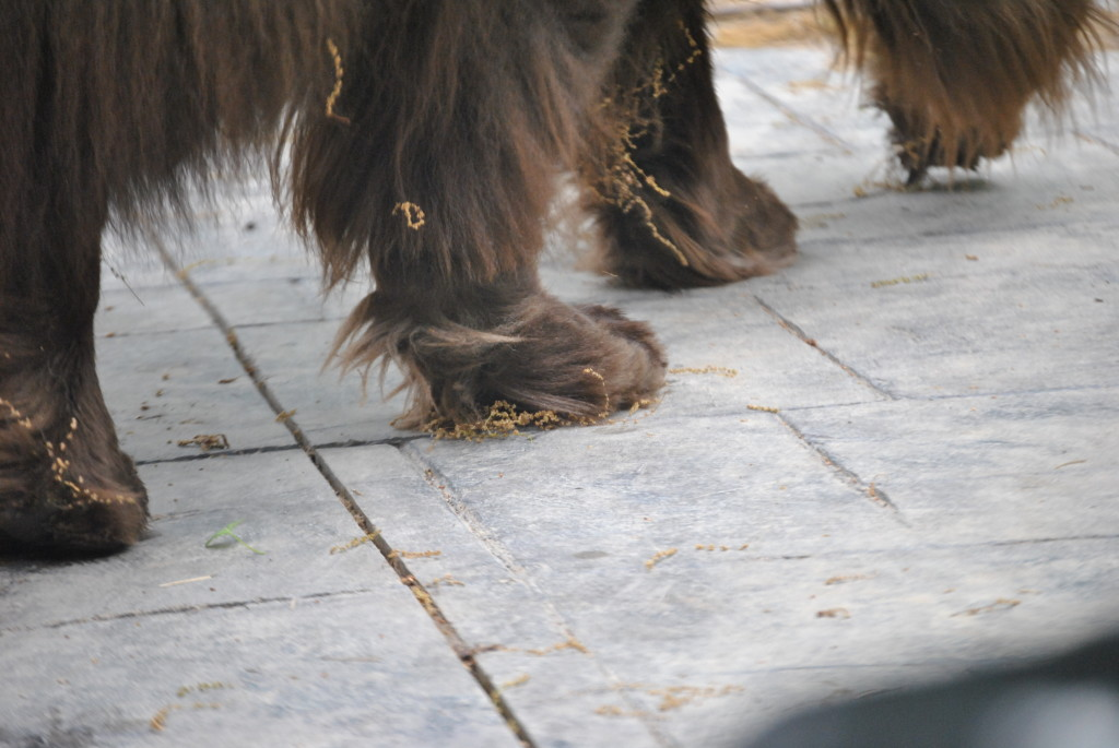 What Are Those Stringy Things Stuck On My Dogs This Spring