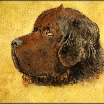 A Stunning Watercolor Portrait of Sherman